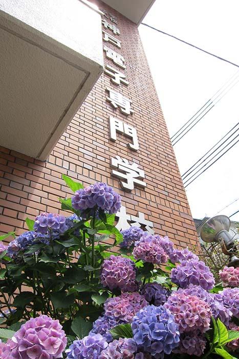 2016_ajisai_01
